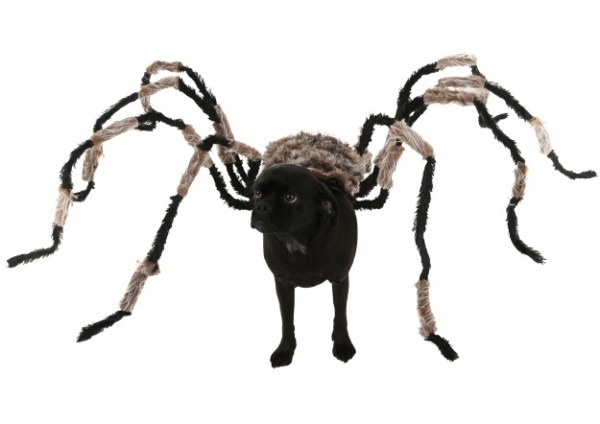 Diy Spider Dog Costume