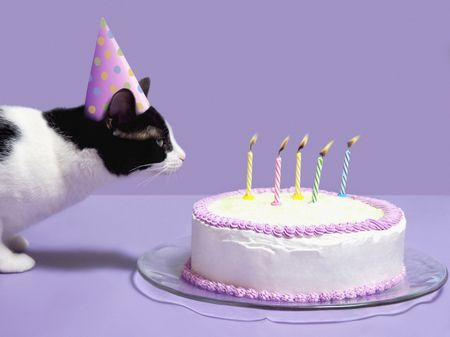 7 Fun Ways To Celebrate Your Cat's Birthday