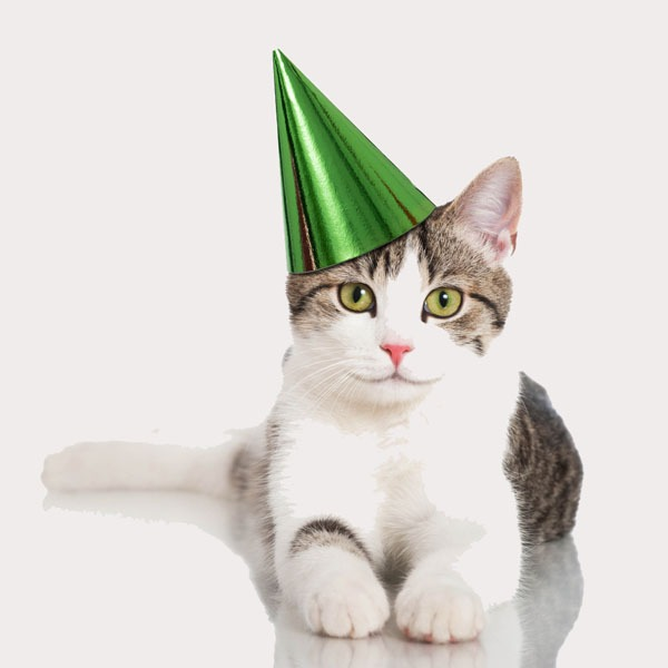 It's Your Cat's Birthday  You And Your Kids Can Throw A Party