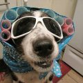 Easy Diy Dog Costumes